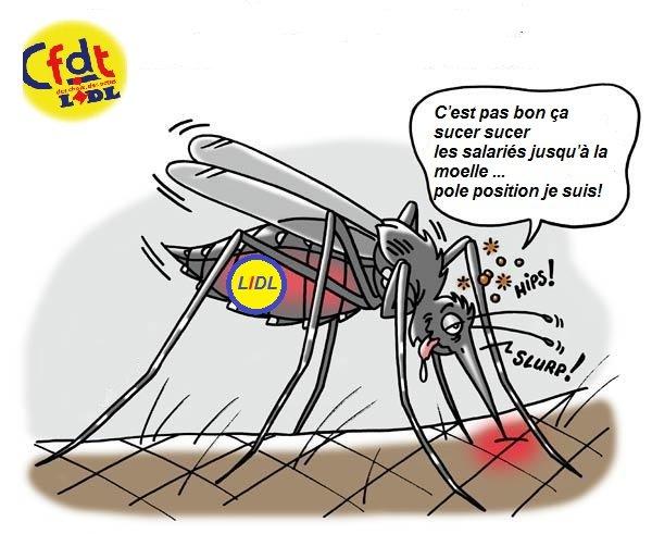 moustique LIDL